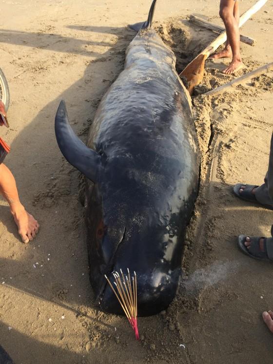 Phát hiện con cá voi nặng gần 1 tấn trôi dạt vào bờ biển ảnh 3