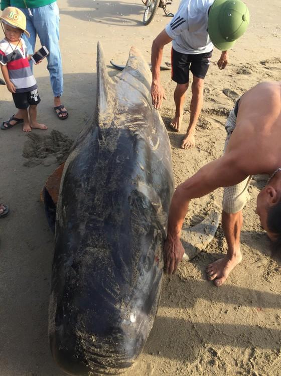 Phát hiện con cá voi nặng gần 1 tấn trôi dạt vào bờ biển ảnh 1