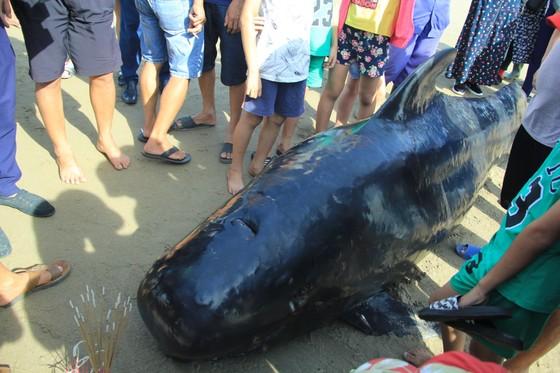 Phát hiện con cá voi nặng gần 1 tấn trôi dạt vào bờ biển ảnh 2