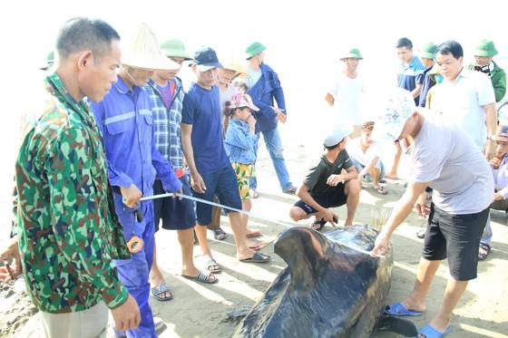 Phát hiện con cá voi nặng gần 1 tấn trôi dạt vào bờ biển ảnh 7
