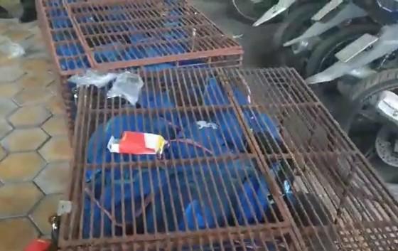 Bắt vụ vận chuyển trái phép 30 cá thể tê tê từ Lào về Việt Nam ảnh 2