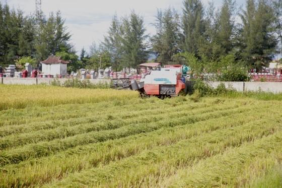 Hà Tĩnh tập trung thu hoạch lúa mùa trước khi bão Podul đổ bộ ảnh 1