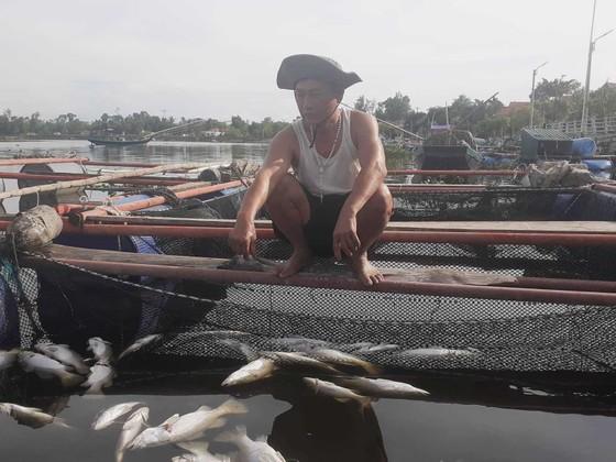Hàng tấn cá nuôi trong lồng bè trên sông bị chết hàng loạt chưa rõ nguyên nhân ảnh 2