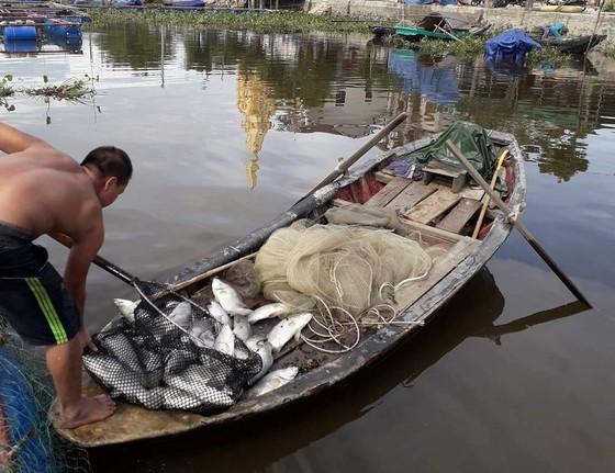 Nhận định nguyên nhân bước đầu khiến cá nuôi lồng bè chết hàng loạt ở Hà Tĩnh ảnh 3