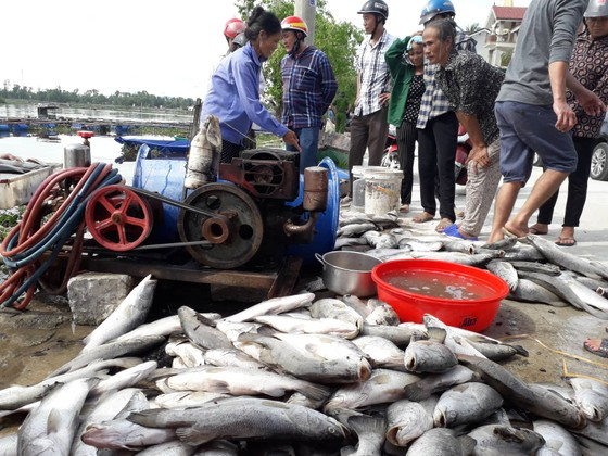 Nhận định nguyên nhân bước đầu khiến cá nuôi lồng bè chết hàng loạt ở Hà Tĩnh ảnh 1