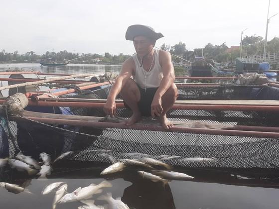 Nhận định nguyên nhân bước đầu khiến cá nuôi lồng bè chết hàng loạt ở Hà Tĩnh ảnh 4