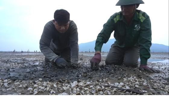 Nghêu nuôi chết sau mưa mưa lũ, người dân Hà Tĩnh bị thiệt hại nặng ảnh 2