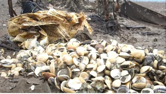 Nghêu nuôi chết sau mưa mưa lũ, người dân Hà Tĩnh bị thiệt hại nặng ảnh 4