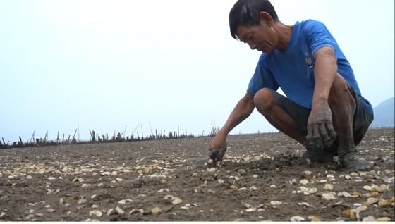 Nghêu nuôi chết sau mưa mưa lũ, người dân Hà Tĩnh bị thiệt hại nặng ảnh 8