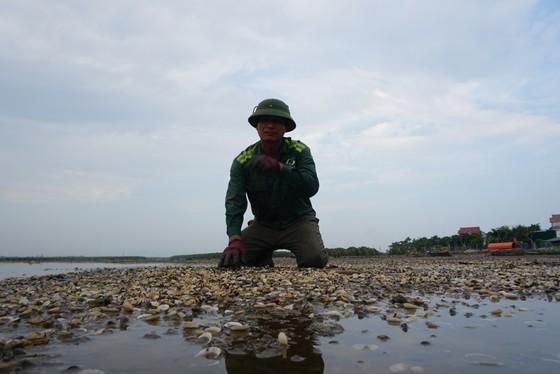 Nghêu nuôi chết sau mưa mưa lũ, người dân Hà Tĩnh bị thiệt hại nặng ảnh 10