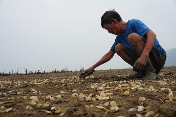 Nghêu nuôi chết sau mưa mưa lũ, người dân Hà Tĩnh bị thiệt hại nặng ảnh 13
