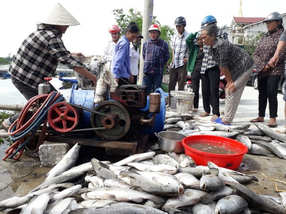 Cơ quan chức năng nói gì về hiện tượng cá nuôi lồng bè chết ở Hà Tĩnh ảnh 2