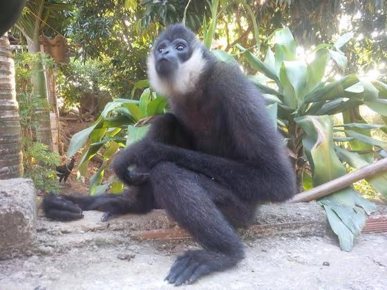 Ghi nhận 8 loài linh trưởng nguy cấp quý hiếm tại Vườn Quốc gia Vũ Quang ảnh 1