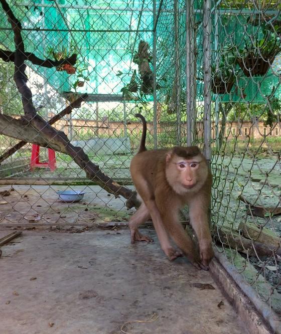 Ghi nhận 8 loài linh trưởng nguy cấp quý hiếm tại Vườn Quốc gia Vũ Quang ảnh 9