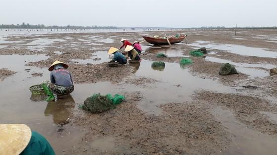 Hàng trăm tấn nghêu nuôi bị chết ở Hà Tĩnh do sốc nước ngọt sau mưa lũ ảnh 4