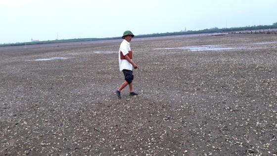 Hàng trăm tấn nghêu nuôi bị chết ở Hà Tĩnh do sốc nước ngọt sau mưa lũ ảnh 1