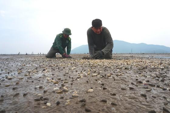 Hàng trăm tấn nghêu nuôi bị chết ở Hà Tĩnh do sốc nước ngọt sau mưa lũ ảnh 6