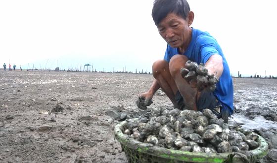 Hàng trăm tấn nghêu nuôi bị chết ở Hà Tĩnh do sốc nước ngọt sau mưa lũ ảnh 3