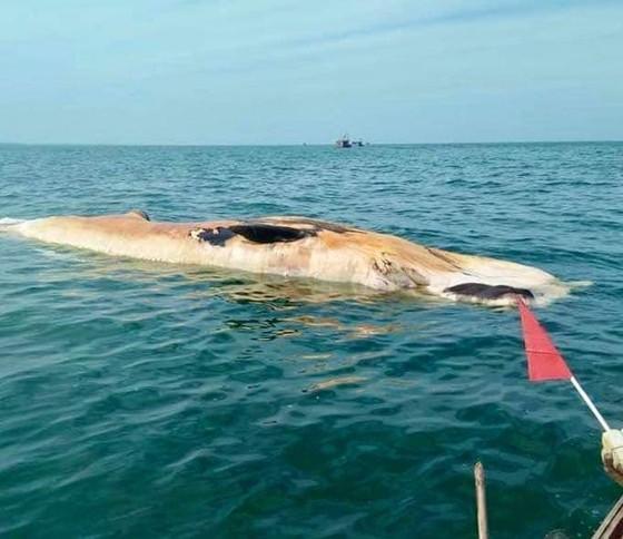 Phát hiện xác cá voi lớn trôi dạt vào bờ biển Hà Tĩnh ảnh 3