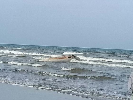 Phát hiện xác cá voi lớn trôi dạt vào bờ biển Hà Tĩnh ảnh 7