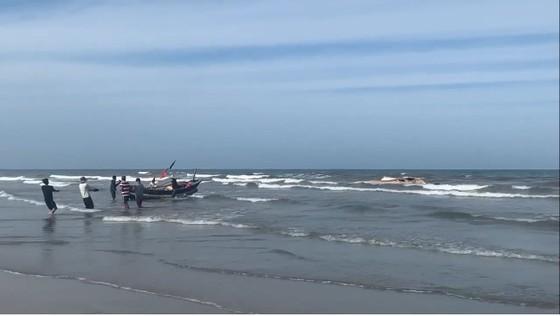 Phát hiện xác cá voi lớn trôi dạt vào bờ biển Hà Tĩnh ảnh 2