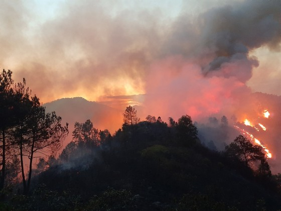 Cơ bản khống chế được đám cháy rừng ở Hà Tĩnh ảnh 8