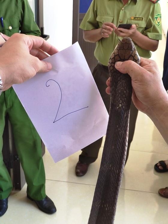 Bắt đối tượng vận chuyển 2 con rắn hổ mang nặng 6kg ảnh 2