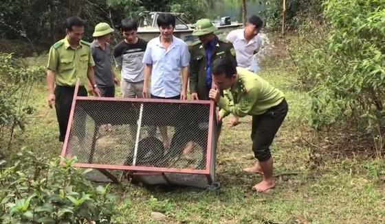 Thả trăn gấm quý hiếm nặng 35kg, dài gần 3m về tự nhiên ở Hà Tĩnh ảnh 3