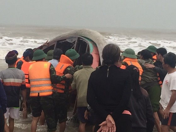 Kịp thời cứu sống hai ngư dân bị chìm thuyền trên biển ảnh 1