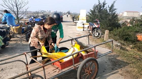 Ngư dân Hà Tĩnh trúng mẻ cá chim vây vàng khoảng 600 triệu đồng ảnh 5
