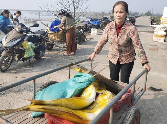 Ngư dân Hà Tĩnh trúng mẻ cá chim vây vàng khoảng 600 triệu đồng ảnh 4