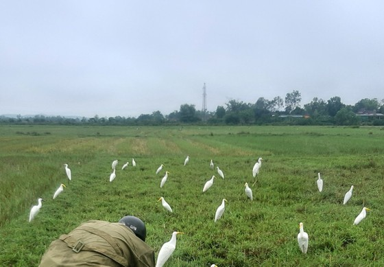 Hà Tĩnh: Tăng cường xử lý tình trạng săn bắt chim tự nhiên, động vật hoang dã ảnh 1