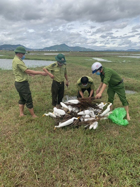 Hà Tĩnh: Tăng cường xử lý tình trạng săn bắt chim tự nhiên, động vật hoang dã ảnh 3