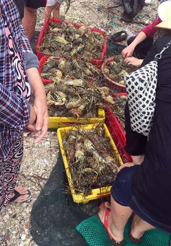 Nhà máy xả thải vô can vụ tôm hùm chết hàng loạt ở Phú Yên ảnh 1