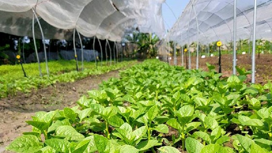 Tanifarm với ước mơ nâng tầm nông sản Việt  ảnh 1