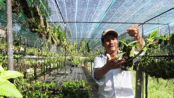 25 năm sống khỏe với nghề trồng lan ảnh 1