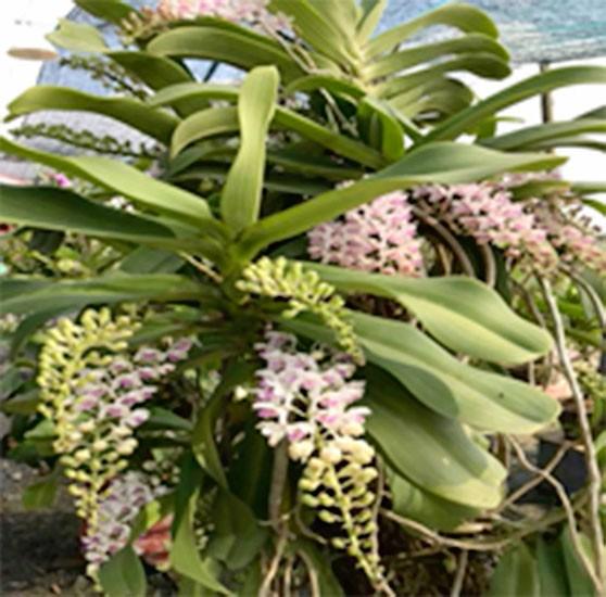 Làm giàu với nghề trồng hoa, cây kiểng ảnh 2
