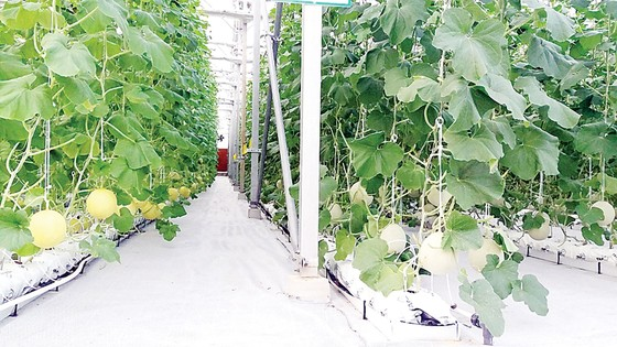 Khám phá nông nghiệp hàng đầu thế giới bên trong VinEco Nam Hội An  ảnh 3