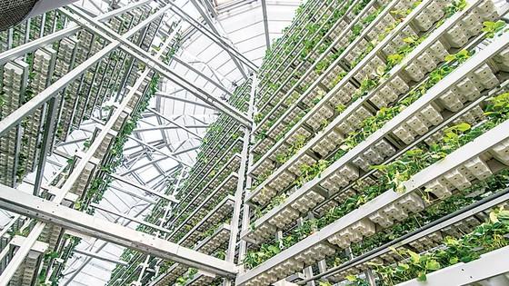 Khám phá nông nghiệp hàng đầu thế giới bên trong VinEco Nam Hội An  ảnh 2