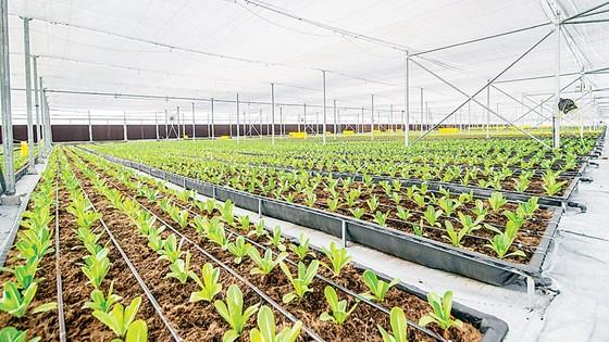 Khám phá nông nghiệp hàng đầu thế giới bên trong VinEco Nam Hội An  ảnh 4