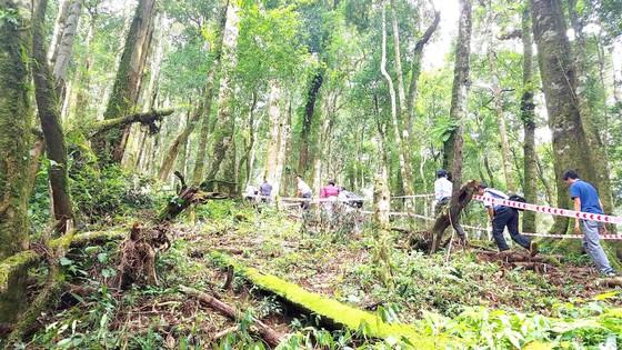 Cho thuê rừng để giữ rừng ảnh 1