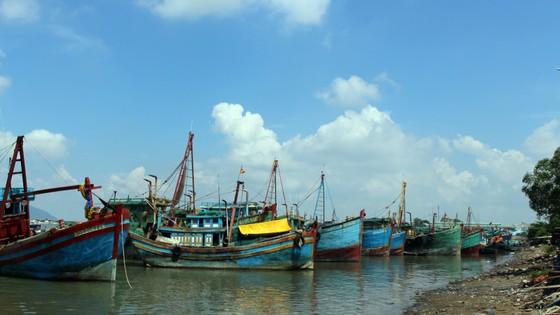 1.000 tàu cá nằm bờ… ảnh 1