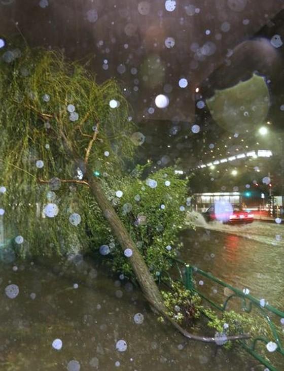 Siêu bão Faxai đổ bộ Nhật Bản, giao thông nhiều nơi tê liệt ảnh 2