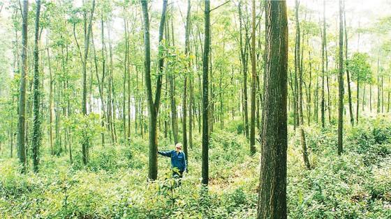 Khơi thông ngành gỗ bền vững  ảnh 2