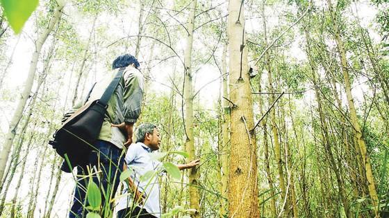 Khơi thông ngành gỗ bền vững  ảnh 1