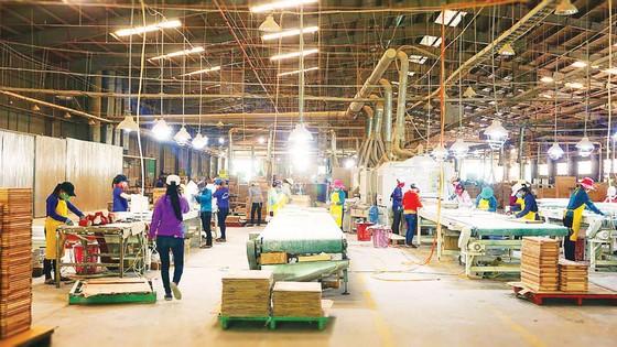 Khơi thông ngành gỗ bền vững  ảnh 4