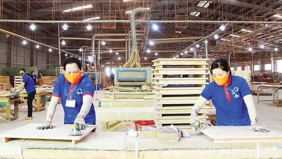 Khơi thông ngành gỗ bền vững  ảnh 6