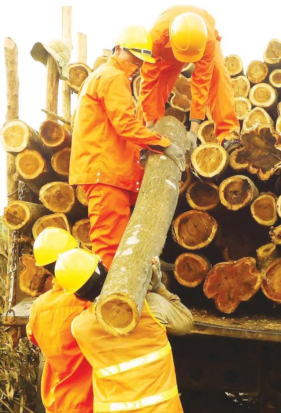 Khơi thông ngành gỗ bền vững  ảnh 3