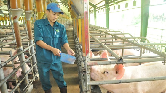 Thúc đẩy sản xuất - tiêu thụ nông sản vùng kinh tế trọng điểm phía Nam: Đề xuất các chính sách và giải pháp thực hiện ảnh 1