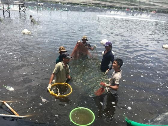 Chăn nuôi, thủy sản đang thua lỗ hàng tỷ đồng mỗi ngày do dịch Covid-19 ảnh 1